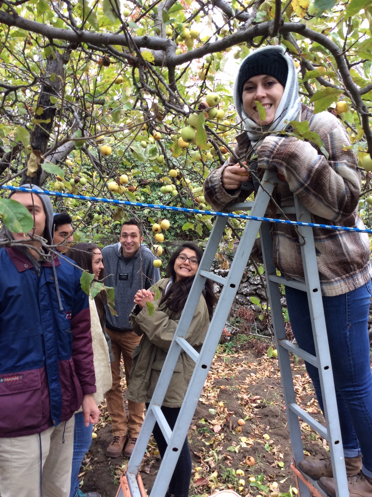 Apple-picking service in Catania, Italy